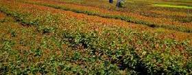 Encomenda Servicos agro - florestais