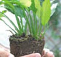 Encomenda Manutenção de jardins