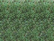 Encomenda Plantío de todos tipos de gramas
