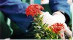 Encomenda Plantío e cuidados de plantas , folhagens, flores