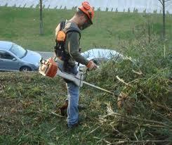 Encomenda Limpezas de terrenos