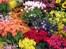 Encomenda Seleção de flores ornamentais.