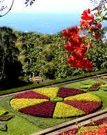 Encomenda Criação de imagens em plantas coloridas para jardisn.