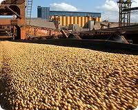 Encomenda Exportação dos produtos agrícolas