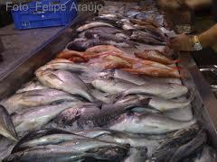 Encomenda Conservação de peixe
