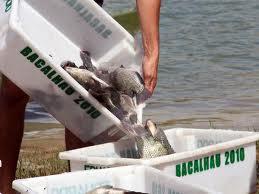 Encomenda Fornecimento do peixe