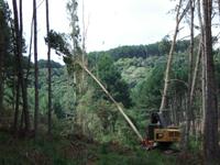 Encomenda Operações Florestais