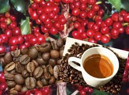 Encomenda Exportacao cafe