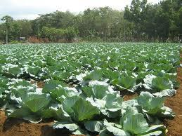 Encomenda Pericia de produtos agricolas