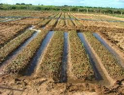 Encomenda Sistemas de irrigação.