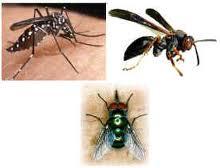 Encomenda Cjntrole de insetos voadores