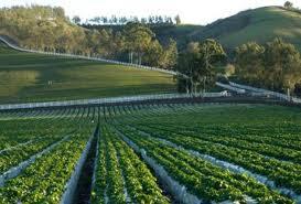 Encomenda Agropecuária