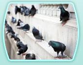 Encomenda Controle de pombos