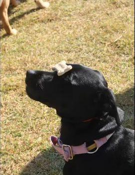 Encomenda Adestramento de Cães em Grupo