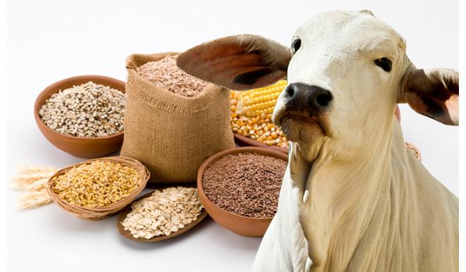 Encomenda Commodities Agrícolas