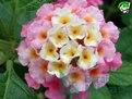 Encomenda Terapia Floral