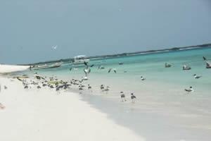 Encomenda Pacote - Caribe Leste
