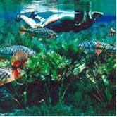 Encomenda Pacote - Trem do Pantanal + Bonito