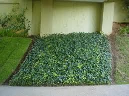 Encomenda Venda e plantio de grama