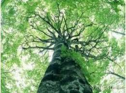 Encomenda Poda de árvores