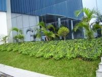 Encomenda Produção de plantas