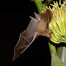 Encomenda Desalojamento de pombos e morcegos