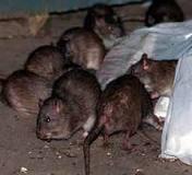 Encomenda Controle de roedores