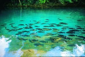 Encomenda Pacote - Pantanal & Bonito Rodo