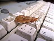 Encomenda PCI - Programa de controle de insetos