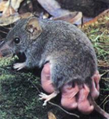 Encomenda PCR - Programa de сontrole de roedores