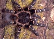 Encomenda Combate a aranhas
