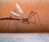 Encomenda Combate a mosquitos