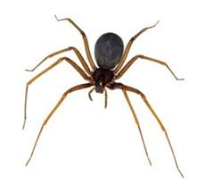 Encomenda Combate a aranhas.