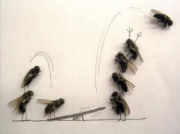 Encomenda Combate a moscas