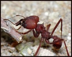 Encomenda Combate a formigas