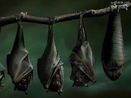 Encomenda Controle de morcegos