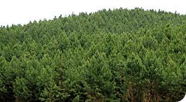 Encomenda Biomassa