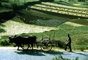 Encomenda Contabilidade rural