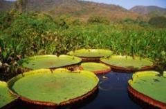 Roteiro Pantanal, Cultura, Aventura e Selva 05 Dias e 04 Noites
