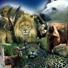 Dia da Criança - Zoológico Sapucaia