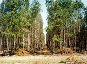 Investimento em empresas de área florestal