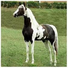 Criação de cavalos.