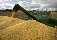 Exportação de trigo e cereais