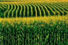 Criação das sementes das culturas agrícolas