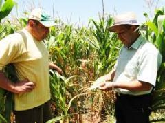 Pericia de produçao agricola