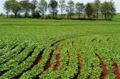 Pericia de qualidade de produçao agricola