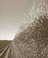 Área agronômica