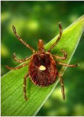 Purificação de infecções, insetos e roedores