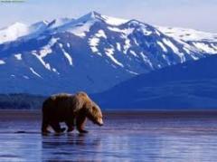 Pacote - Estados Unidos da América – Alaska