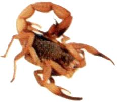 Escorpioes